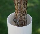 Tree Trunk Protector >> Plastic Tree Trunk Protectors